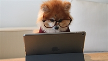 Image of dog sat at a laptop