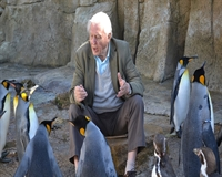 Man and penguins
